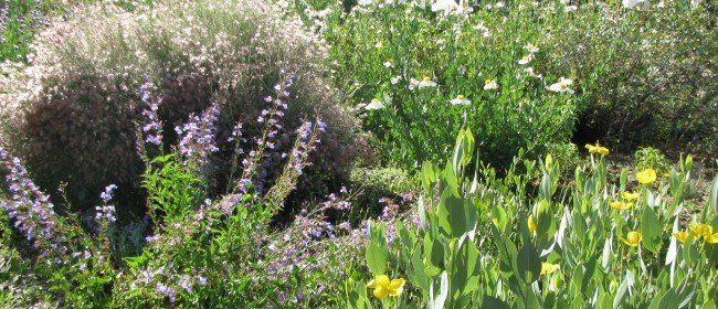 Lessons Learned on our Waterwise Landscaping (and upcoming native plant sales)
