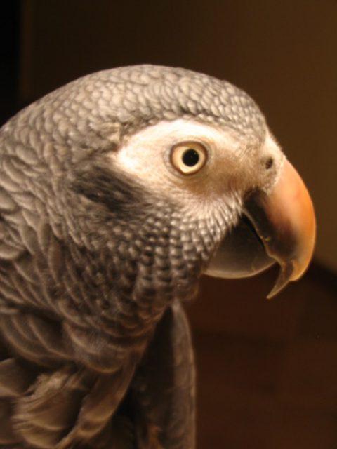 Bird Brain – a Myth….