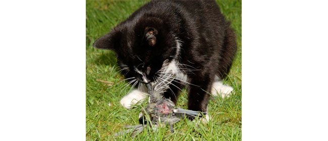 Save a Songbird: Keep Cats Inside