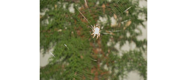 To Kill or Not to Kill Spiders….and Do Spiders Bite?