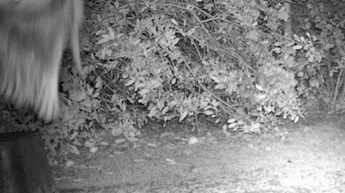 Wildlife Cam Shots–While You're Sleeping
