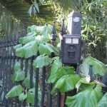 Our Bushnell Trophy Trail Camera