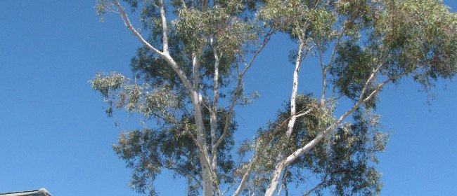 Tree Pruning: Resist Topping Trees