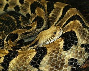 Even More on Rattlesnake Relocation