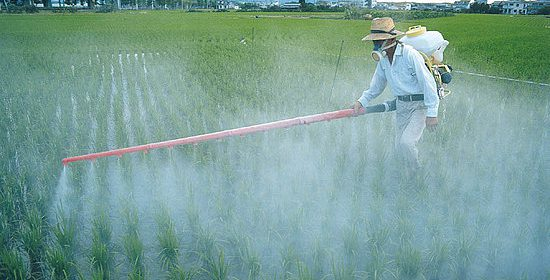 Pesticides Negatively Affect Human Health
