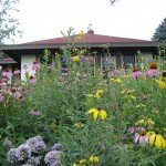 Purple Coneflowers dot the Damon's yard