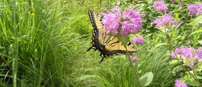 Our Vital Pollinators: Birds, Bats, Bees and Butterflies