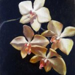 Orchid painting by Christine White