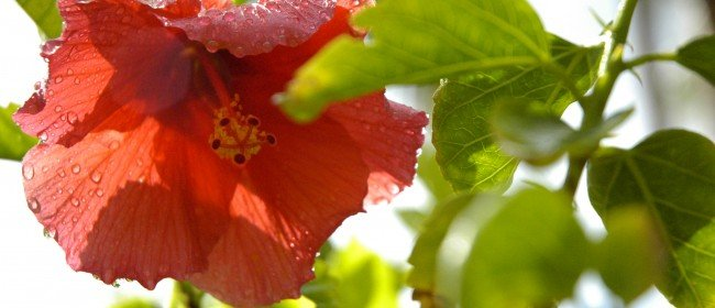 Plant Smarts: Do Plants Feel?