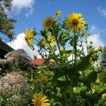 Cupplant & Sweet Joe-Pye Weed, great wildlife-attracting plants
