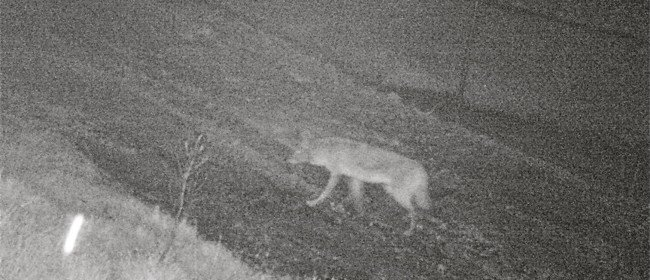 More Wildcam Photos – While You're Sleeping