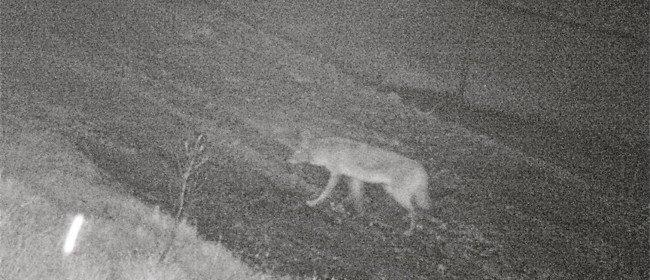 More Wildcam Photos – While You're Sleeping