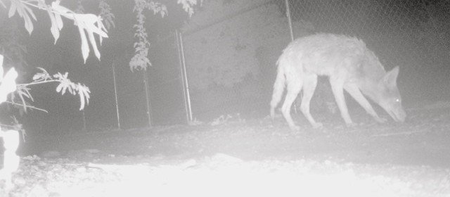 Wildcam photos from last night