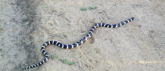 It's Springtime for Baby Rattlers and Other Snakes
