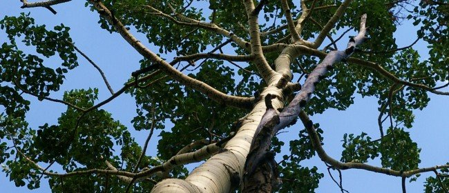 The Science of Trees