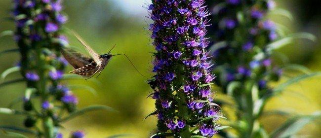 Favorite Plants for Attracting Birds/Butterflies (California/Southwest)
