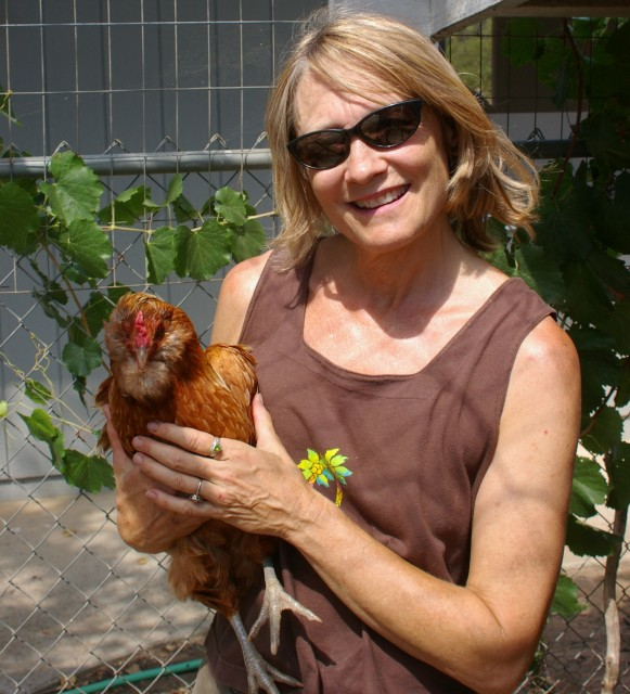 Our arcaucana chicken. Roja, escaped the jaws of a coyote -- and lived -- when I suddenly appeared and scared it