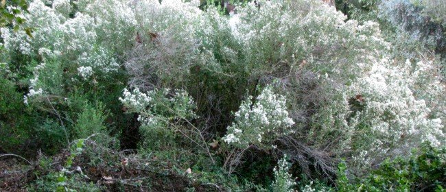 Seek Local Native Plants for Cold (and Hot) Tolerance