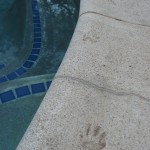 Evidence that the raccoons are drinking from the pool