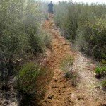 A sandy trail up on one of the mesas
