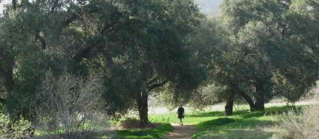 Great Hikes: 'Wild' Wildwood Canyon State Park
