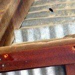 Female carpenter bee defending his holes