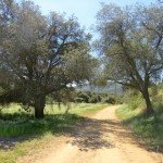the Water Canyon trail is mostly sunny except for the shade of a few native California oaks