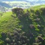 One of the many Oakmont Park hills