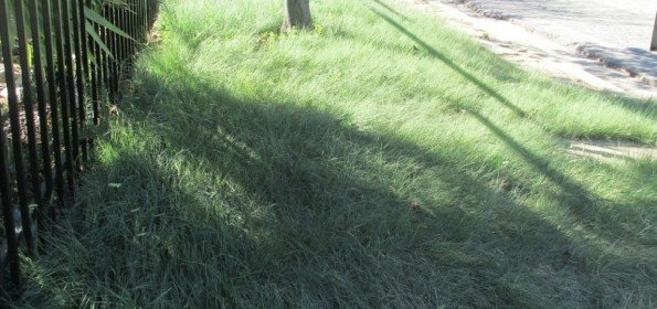 Using low water native grasses for your lawn