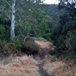 A  trail into the backcountry