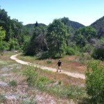 The Stream Trail