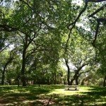 Oak Knoll Park and its many picnic tables