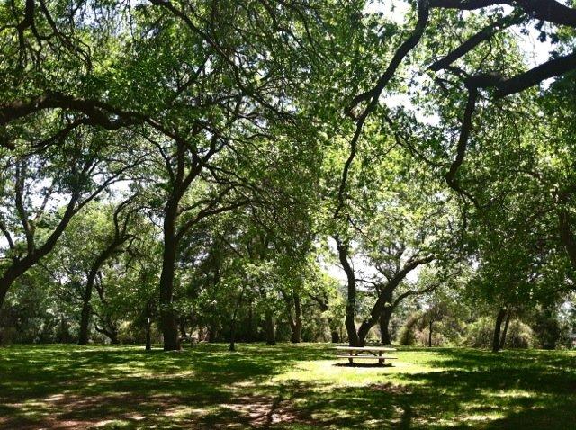 Oak Glen Preserve In Spring If Nature Could Talk