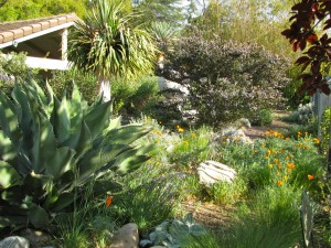 Our former yard is now full of California natives & other low-water & wildlife friendly plants