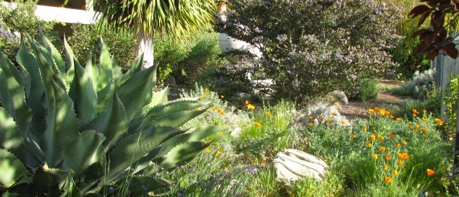 Sustainable landscaping: Some tips…