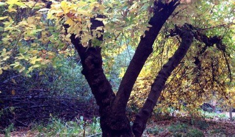 Great Hikes: Oak Glen Preserve for Fall Colors
