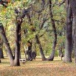 the preserve's picnic area