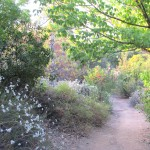A July scene in Redlands' Caroline Park, which features native plants