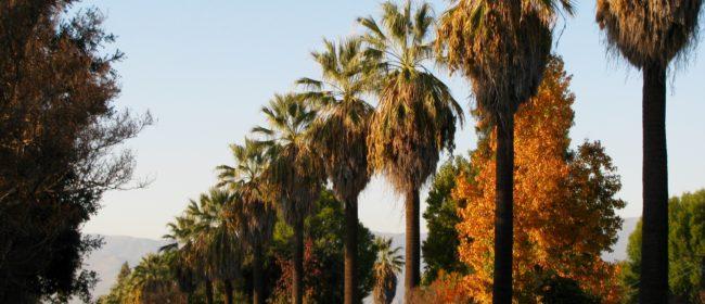 Pruning 101: Correct Palm Pruning