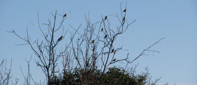 12 Ways to Help Birds on their Migration