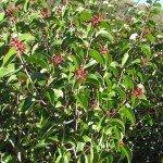 A healthy sugar bush in January