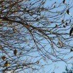 More bird flocks
