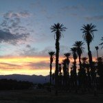 Date Palms at Furnace Creek Resort (nice place)