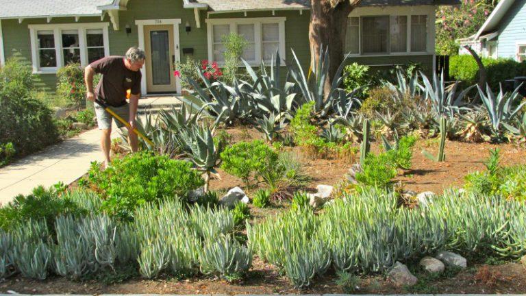 More Examples Of Drought Tolerant Landscapes If Nature