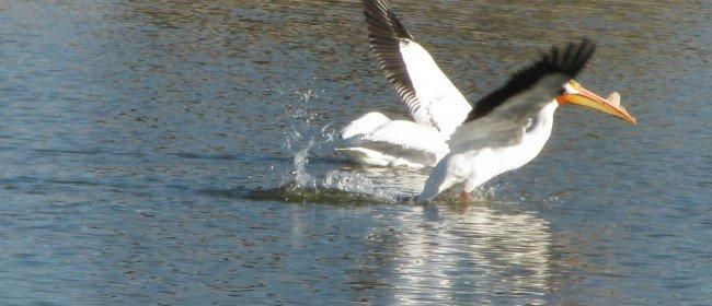 Favorite Birding Spots in Inland Southern California