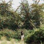 Linda in front of 25+ foot fremontia hybrid at Rancho Santa Ana Botanic Garden