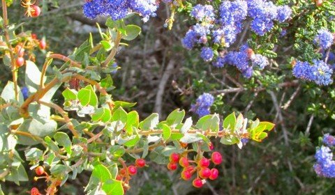Why Native Plants?  Attracting birds is another important reason
