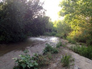 San Timoteo Creek (tributary of Santa Ana Creek)