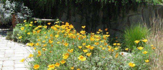 School's Native Plants Attract Higher Test Scores