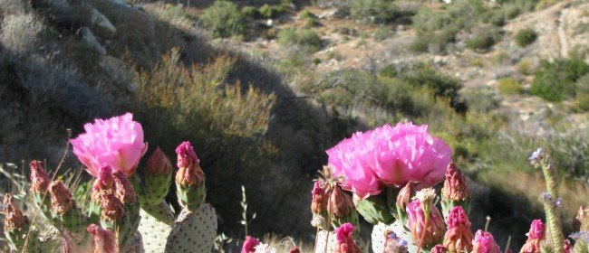 Great hikes:  Desert Wildflowers (& why to support conservation efforts)